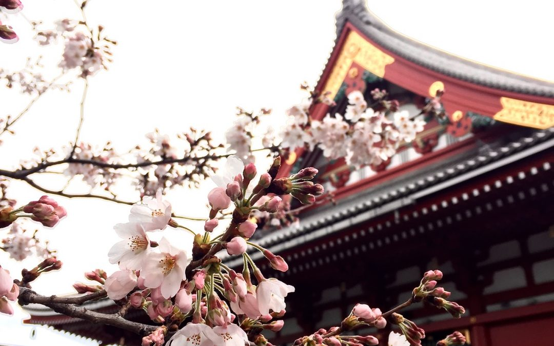 Helpful Tips for Visiting Temples and Shrines in Japan